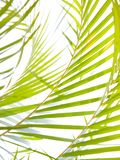 Green palm fronds stock photos