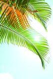 Green palm fronds against blue sky royalty free stock photography