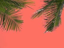 Green palm fronds against the coral tone background. Tropical vacation concept royalty free stock image
