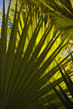 Green palm fronds crisscross across image Stock Photography