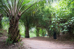 Green palm garden and palm oil Royalty Free Stock Images