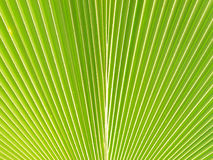 Green palm Leaf Royalty Free Stock Photos