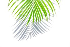 Free Green Palm Leaf And Shadow On A White Background. Royalty Free Stock Photos - 102978428