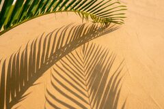 Free Green Palm Leaf And Shadows On Beach Texture Background Stock Images - 183470934