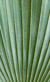Green palm  leaf background Royalty Free Stock Images
