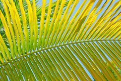 Green Palm Leaf Background Stock Images
