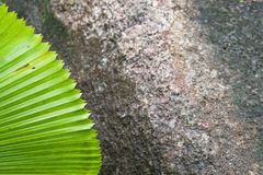 Green palm leaf on a background of dark stone. Stock Image