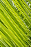 Green palm leaf background. Tropical plant leaves. Stock Photo