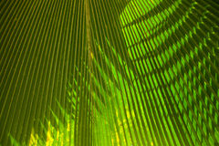 Green palm leaf background Royalty Free Stock Photography