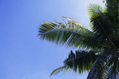 Green palm leaf on blue sky background. Tropical summer sky. Tropic island nature photo Royalty Free Stock Photos
