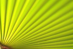 Green palm leaf close up Stock Photos