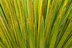 Green palm leaf close up Stock Photos