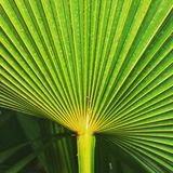 Closeup of palm leaf in Italy. Concept convergence diversification royalty free stock photo