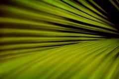 Green palm leaf with diagonal stripes. Fresh green palm leaf with diagonal stripes Stock Image