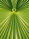 Green palm leaf frond symmetrical geometric design Royalty Free Stock Photos