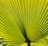 Green palm leaf. Pattern or background Stock Images