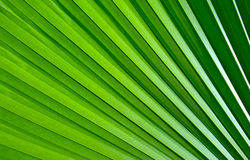 Green palm leaf pattern Royalty Free Stock Photo