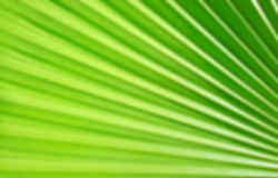Green palm leaf pattern background Stock Images