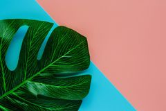 Green palm leaf on pink and blue color background for decoration. Flat lay and top view image stock photography