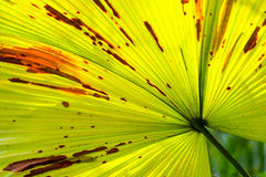 Green palm leaf with shadows at a tropical garden Royalty Free Stock Photos