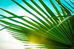 Green palm leaf with sunny light gap in a bright blue summer sky stock photography