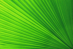 Green palm Leaf Stock Images