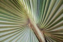 Green palm Leaf Stock Photos