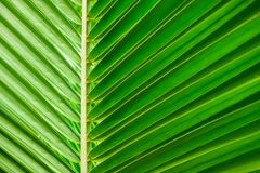 Green palm leaf textures Stock Image