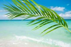 Palm leaf, tropical  blue sea under the sun. Green Palm leaf, tropical  blue sea under the sun Royalty Free Stock Photo