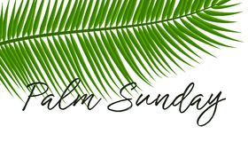 Green Palm leafs  icon. Vector illustration for the Christian holiday Palm Sunday. Green Palm leafs  icon. Vector illustration for the Christian holiday. Palm Stock Images