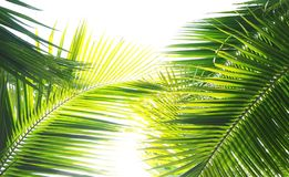 Green Palm Leaves Stock Photos