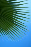 Green palm leaves. Close up photo of green palm leaves Stock Image