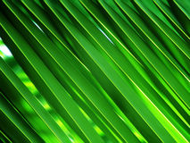 Green palm leaves Royalty Free Stock Photo