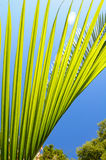 Green palm leaves Royalty Free Stock Images