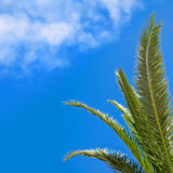 Green palm leaves above blue sky with clouds Stock Photos