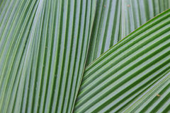 Green Palm leaves Stock Photography