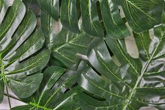 Green palm leaves on background stock photography