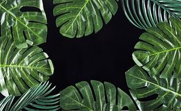 Green palm leaves on background royalty free stock photo