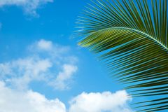 Green palm leaves on the blue sky Stock Photo
