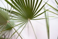 Green palm leaves blurred background. Royalty Free Stock Images