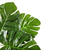 Green palm leaves stock images