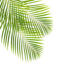 Green palm leaves. Isolated on white backgrouns stock photo