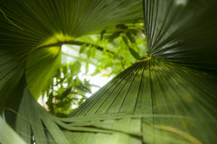 Green palm leaves, Kew Gardens, London. This image shows a closeup of some bright green palm leaves. It was taken in Kew Gardens, London Stock Image