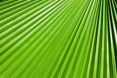 Green Palm leaves. Lines abstract image of Green Palm leaves Royalty Free Stock Images