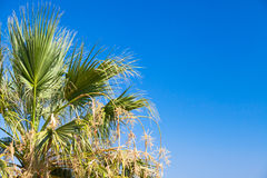 Green palm leaves over clear blue sky in summer Stock Images