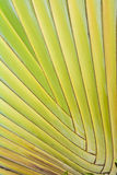 Green palm leaves pattern. Green palm leaves symmetry pattern Stock Image