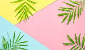 Green palm leaves Floral flat lay Holidays minimal royalty free stock photo