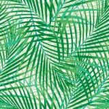 Green palm leaves seamless pattern. Seamless pattern of green palm leaves Stock Image