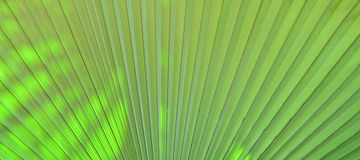 Green palm leaves Royalty Free Stock Photography