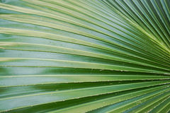 Green palm leaves texture Stock Photos